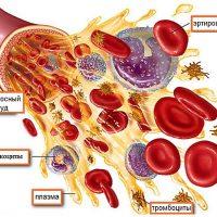 элементы крови