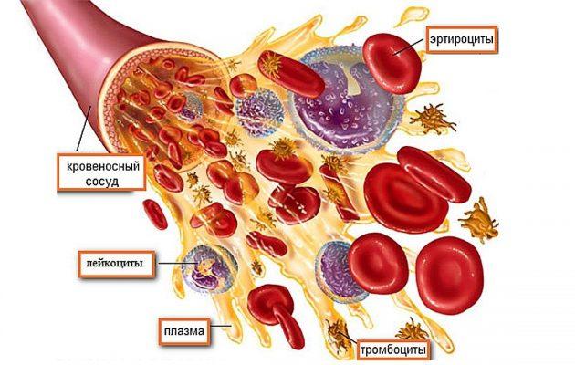 тромбоцит