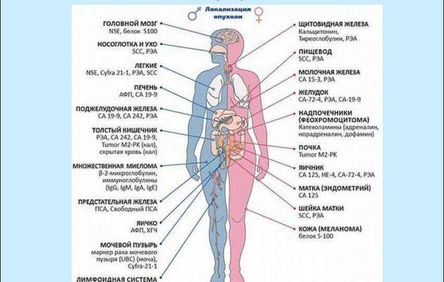 онкомаркеры человека